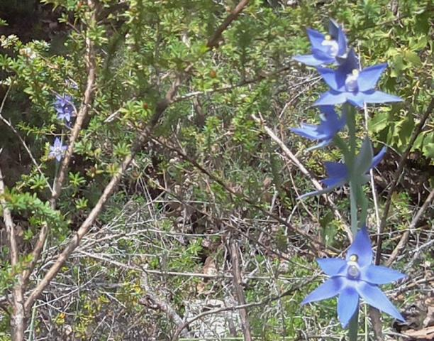PiPole-Cam Sun Orchid